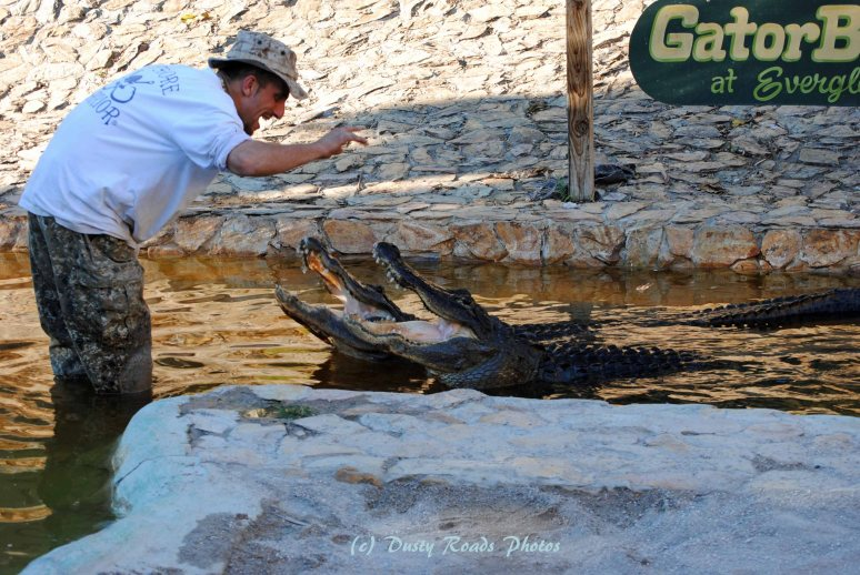 "J-Mart plays ""Gator Whisperer"" at Everglades Holiday Park."