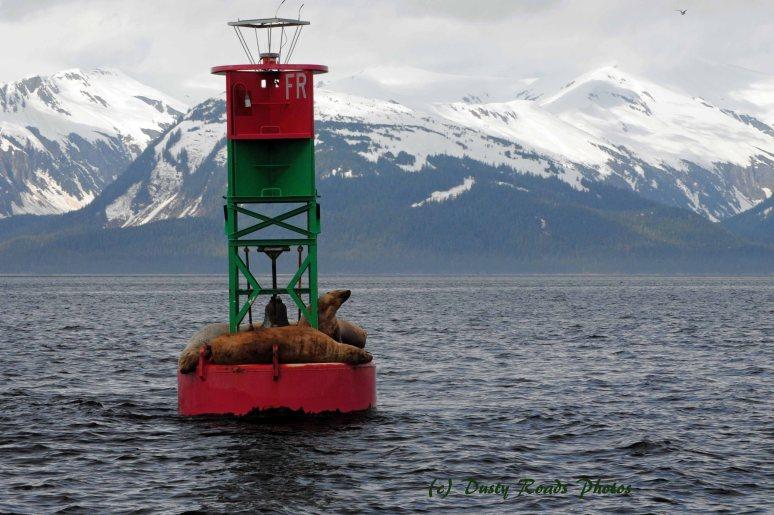 Alaska2013 256a copy