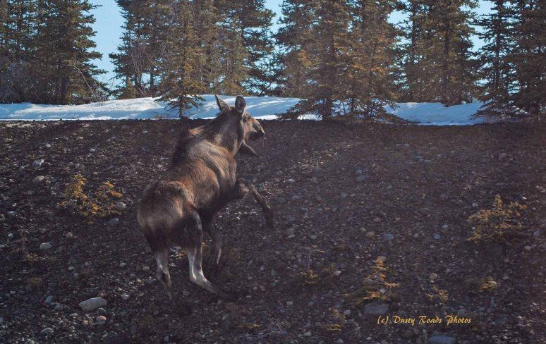 Alaska2013 883a copy