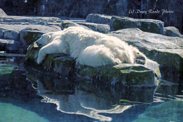 Alaska2013 988a copy