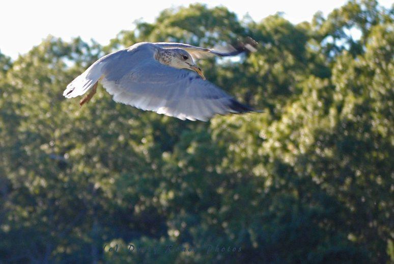 birds 043a copy