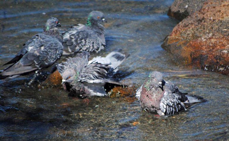 DWParkbirds 004a copy