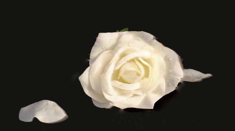 flowers 001a copy