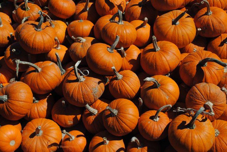 pumpkins 008 copy