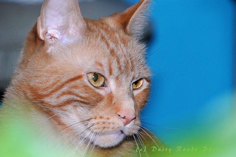CATS2014 018 copy