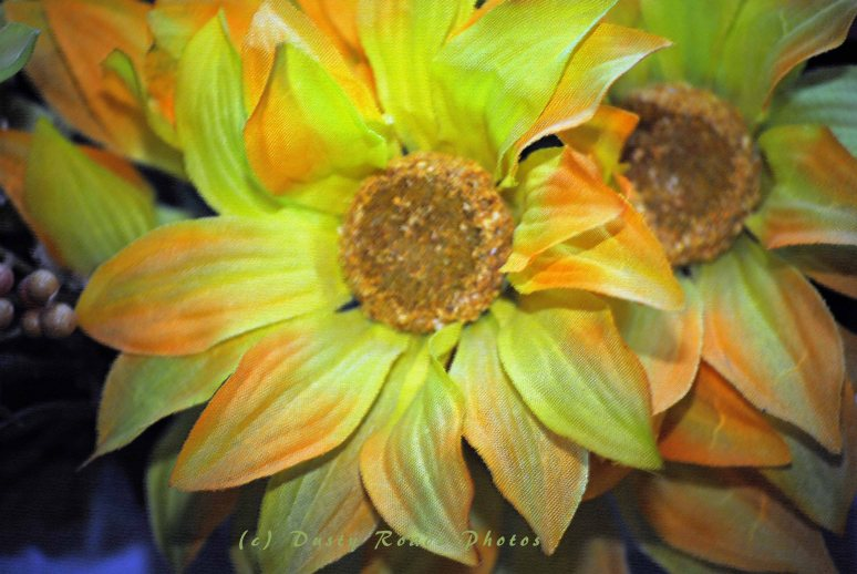 flowers 003a copy