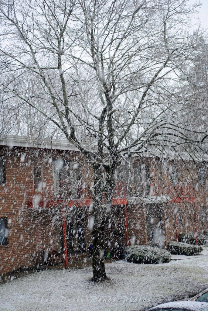 Snow 003a copy