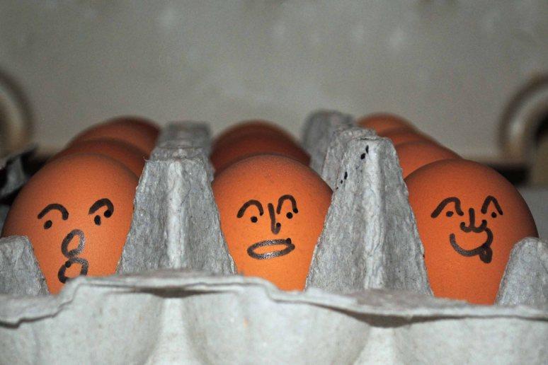 eggheads 003a copy