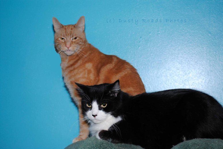 meow 003a copy