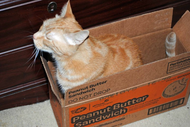 Cat trouble 004 copy