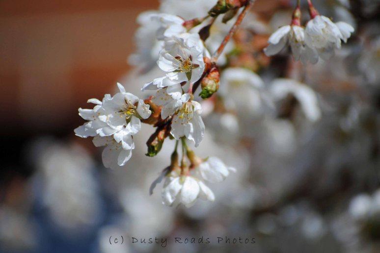 Flowers 005a copy