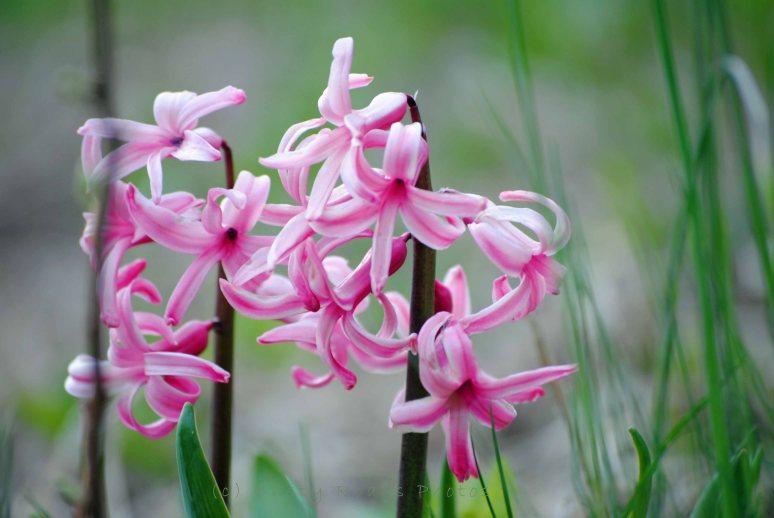flowers 007a copy