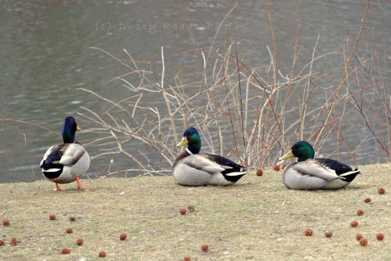 Spring pond 001a copy