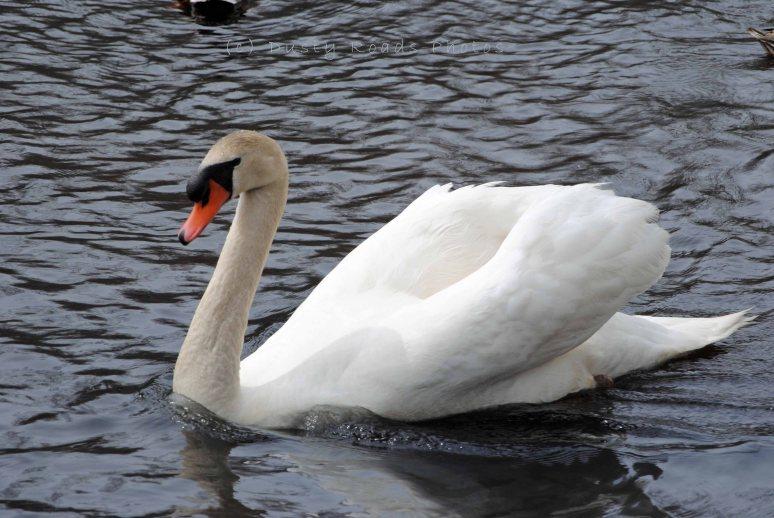 Spring pond 031 copy