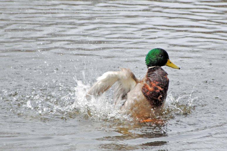 Spring pond 041a copy