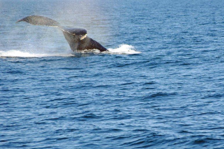 Whales 064a copy