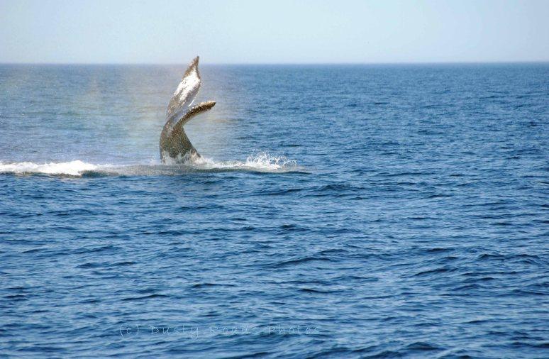 Whales 065a copy