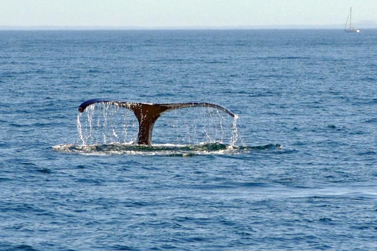 Whales 070ab