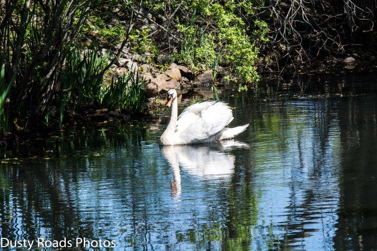 Grist Mill Swan