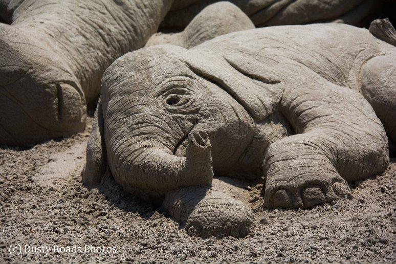 dying baby elephant