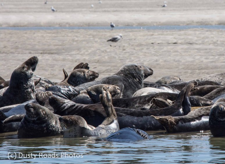 Seals of cape Cod