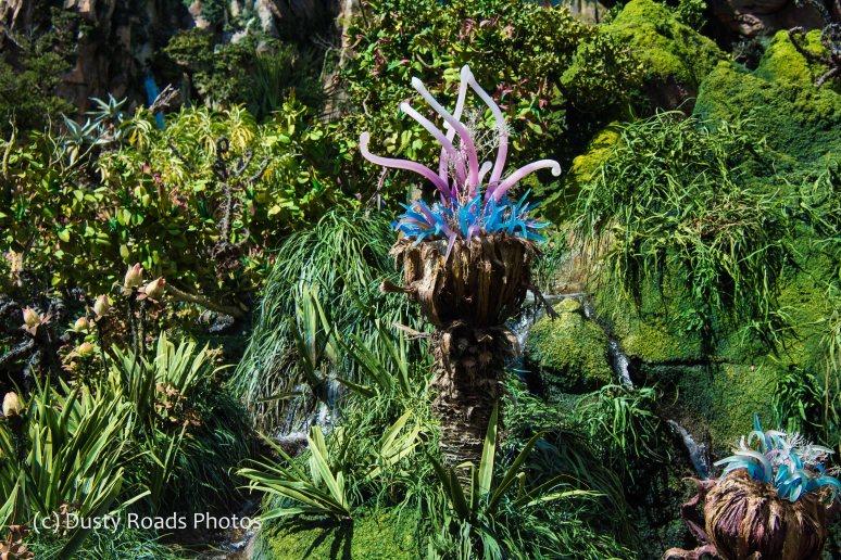 Pandora Plants
